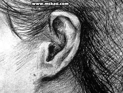 用简单的直线条将耳部的轮廓画出; 女人侧面平光;; 人像素描基础知识