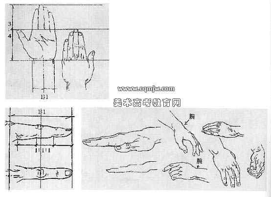 速写人物形体比例与结构