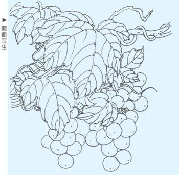 植物线描写生-打印文章