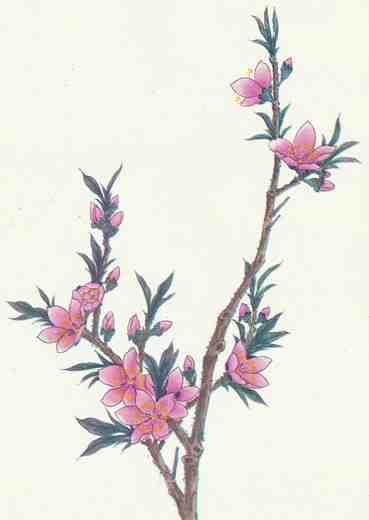 工笔桃花及枝,叶画法步骤