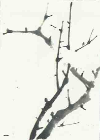 意(点簇)梅花画法步骤写意梅花:先画枝干,再添花朵,后画花托