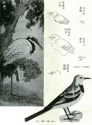 李苦禅画鹰_中国画 画科 样式